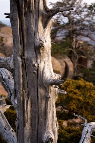 Tree on Mount Scott